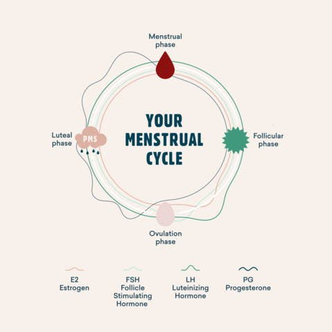 your menstrual cycle and hormone health